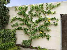 the citrus up against the wall