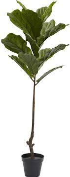 langley fiddle leaf tree in pot reviews wayfair