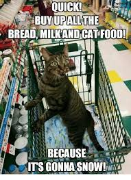 Buy All The Food Meme - tion b ittwor the buy up all bread milkandcat food because its