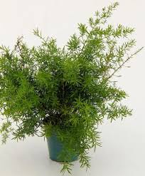 Fragrant Plants For Pots Unusual And Exotic Houseplant Seeds From Around The World