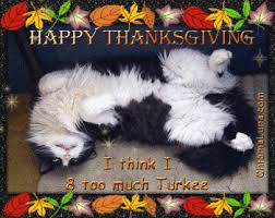 bea s book nook cat thursday thanksgiving