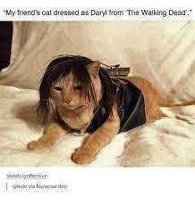 Walking Dead Meme Daryl - my friend s cat dressed as daryl from the walking dead tastefully