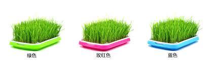 vegetable garden seeder promotion shop for promotional vegetable