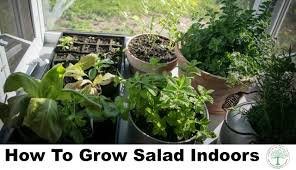 indoor salad google jpg
