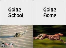 Google Images Funny Memes - funny work quotes funny memes about school google search