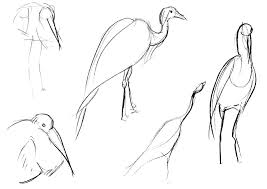 large bird sketches by adele waldrom on deviantart