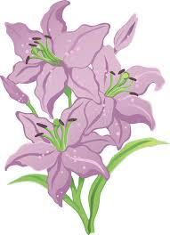 Purple Lillies Three Purple Lilies Stock Photography Image 23568322