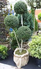 109 best topiary trees images on topiary trees