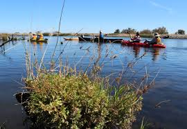 sacramento native plants on the hunt u2014searching for rare plants in the delta bay nature