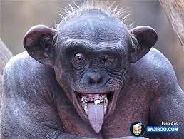 Funny Monkey Meme - funny monkey show tounge pics images bajiroo com