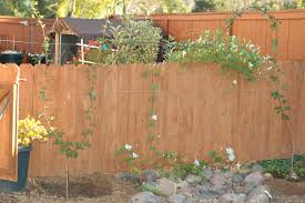 thornless boysenberry homesteadgardenbbqblog