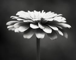 Black And White Photography Black And White Photography Floral Photography Flower