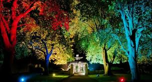 Outdoor Up Lighting For Trees Rainbow Trees Wedding Pinterest Wedding And Weddings Outdoor Up