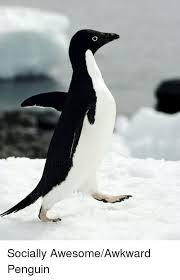 Awkward Penguin Meme Generator - 25 best memes about awesome awkward penguin awesome awkward
