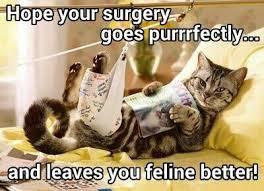 Good Luck Cat Meme - good luck on your surgery meme mne vse pohuj