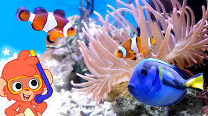 sea animal videos for kids learn ocean animals club baboo