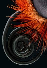 Small Beautiful Pics The Best Microscope Photos Of The Year From Nikon Small World