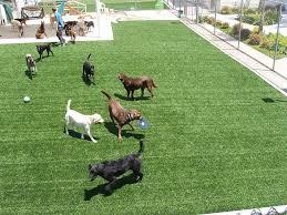 pet friendly artificial turf pet friendly artificial grass