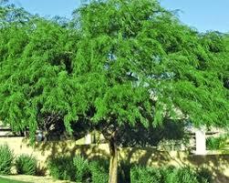 summer lovin trees