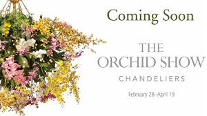 the 2015 orchid show is coming youtube