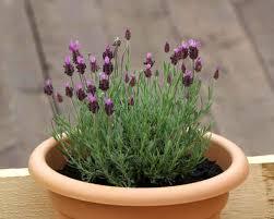 plantes dans la chambre 6 plantes à faire pousser dans votre chambre pour améliorer votre santé