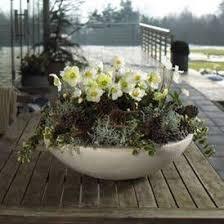 gartenm bel design zauberhafte christrose winter bepflanzungen für balkon und