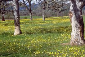Tropical Savanna Dominant Plants - e2 u003deducational u0026 entertainment hub the world u0027s most beautiful and