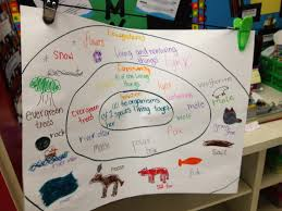 39 best 3rd grade food chain images on pinterest life science