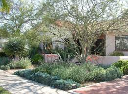 Backyard Trees For Shade - best 25 drought tolerant trees ideas on pinterest drought