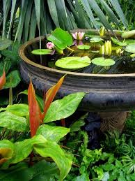 14 best water gardening in containers images on pinterest