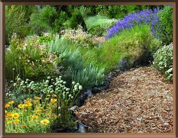 native plants landscaping the joy of gardening with desert native plants the desert