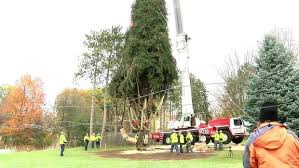 When Do They Light The Tree In Nyc 2017 Rockefeller Christmas Tree Cut Down Readies For Journey To