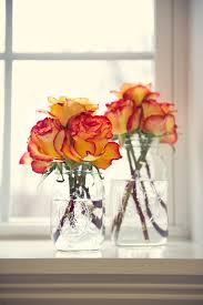 25 unique orange roses ideas on pinterest roses coral roses