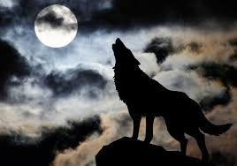 poetry moon lone ghost wolf