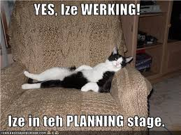 Working Cat Meme - the eco cat lady speaks what are you willing to put up with
