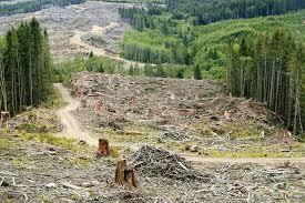 forests november 2017 browse articles corruption drives deforestation nature plants