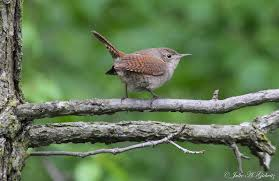 nature u0027s splendor country birds