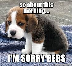 I Am Sorry Meme - im sorry sad pup so about this morning i m sorry bebs