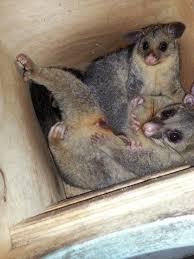 wildlife visitors in october u2013 my wild australia