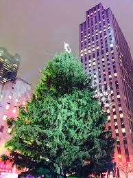 a tree tradition u2013 celebrating the lighting of the rockefeller