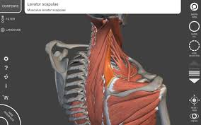 3d Human Anatomy Muscle Skeleton 3d Anatomy Android Apps On Google Play
