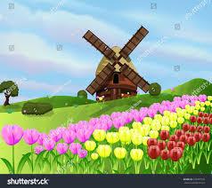 Tulip Field Holland Tulip Field Cartoon Dutch Tulip Stock Illustration