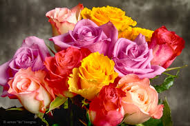 Multicolor Roses Flowers Striking Photography By Bo
