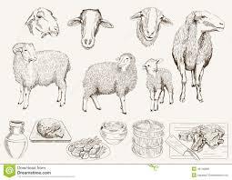 sheep breeding stock vector image 45149808