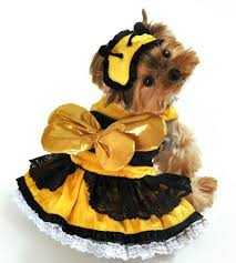 bumble bee dog halloween costume costumes dogs
