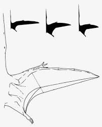 what you wanted to know about pterosaur wings but you u0027ve never