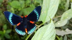 fleeting moments how do butterflies live ask an entomologist