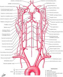 External Female Anatomy Diagram Human Anatomy Educations Page 2 Of 174 Inner Body Anatomy