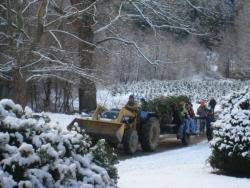 pick your own christmas trees in berkshire county local food