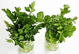 how to store parsley cilantro and other fresh herbs